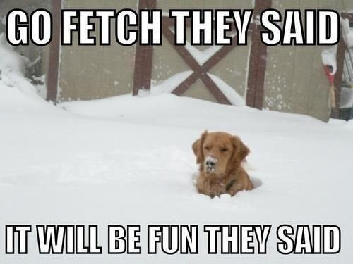 Go fetch they said it will be fun they said so wrong what people do to thier animals