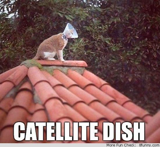 catellite dish cat cone roof