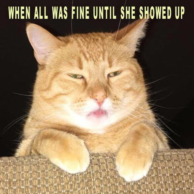 Funny Cat Meme she showed up
