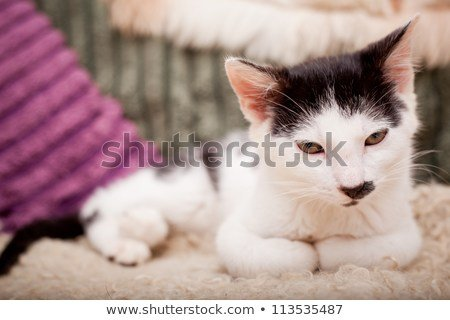 Funny looking male cat in a funny position resting on a sofa