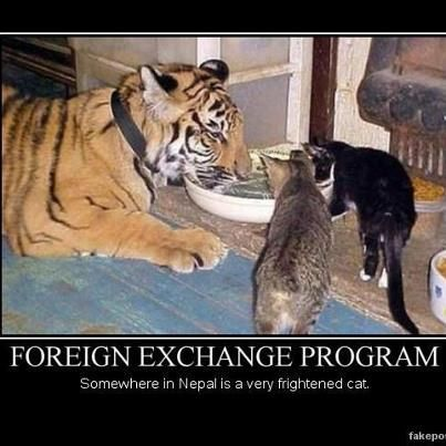 Foreign Exchange Program Somewhere in Nepal is a very frightened cat Funny Animals Are Even Funnier With These Captions Pics