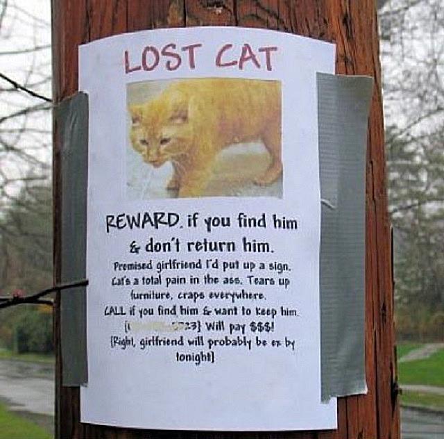 lost cat 58b8c9695f9b58af5c8c9092