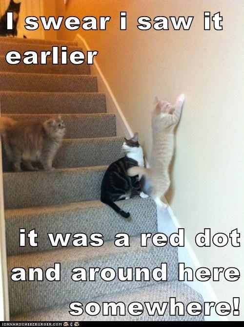 Cats vs Laser Pointer