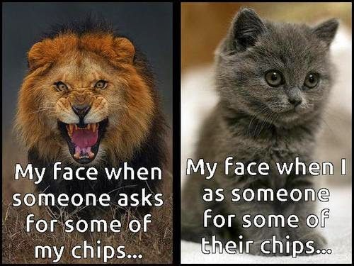 Hilarious meme using cats that very accurately describes most peoples behavior regarding chips in a bag