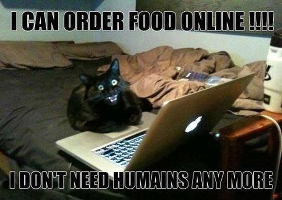 This Funny Cat Meme