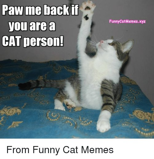 Funny Memes and Back Paw me back if you are a CAT person