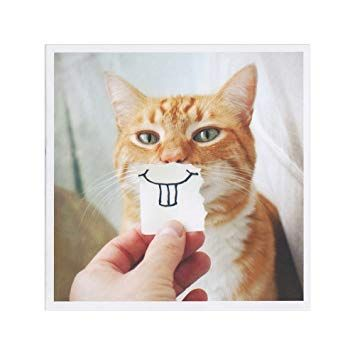 Buck Tooth Kitty Birthday Card Funny Cat Thank You Get Well Soon