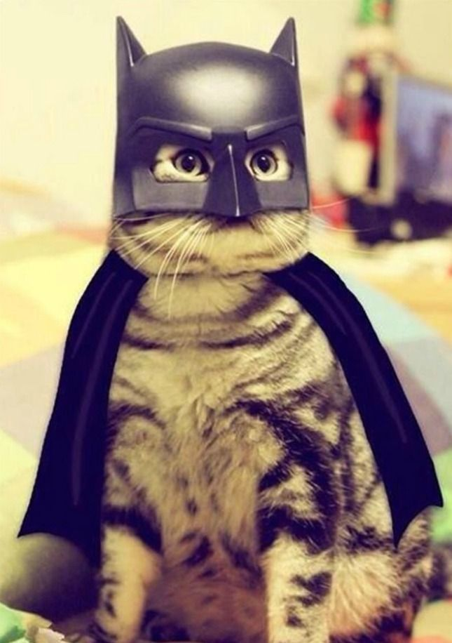 It s Bat Cat