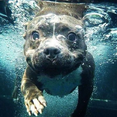 Funny Animals Baby Animals Cute Animals Underwater Dogs Underwater Swimming Underwater