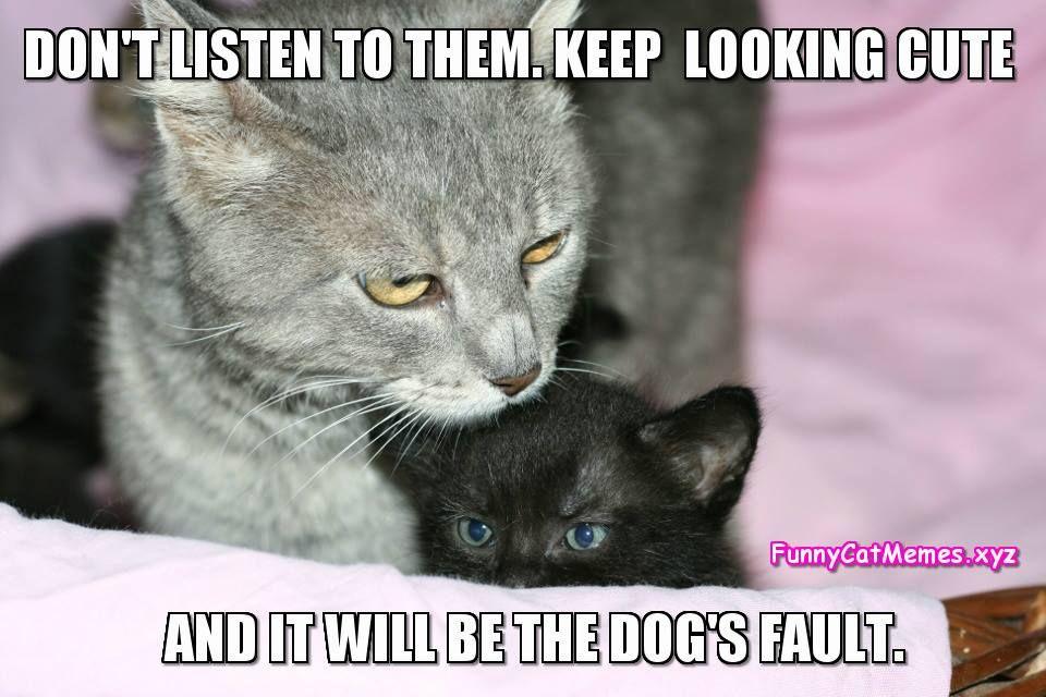 Look cute funny cat memes