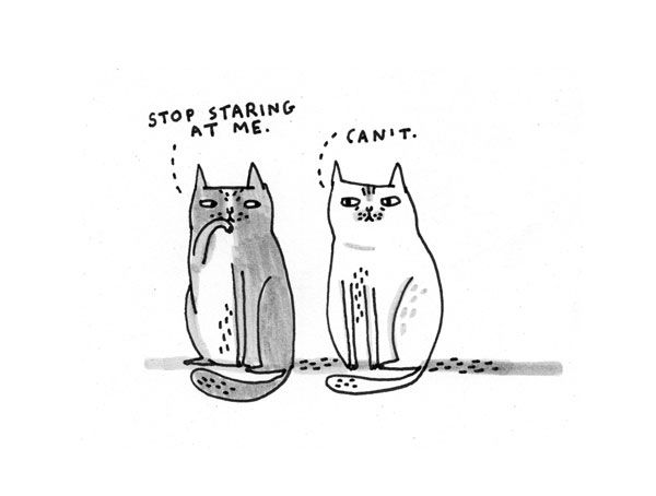 Funny cat drawings from Gemma Correll