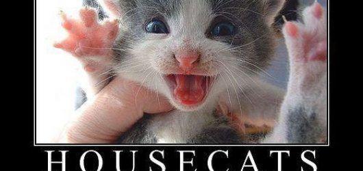 Best LOL Funny Pics Memes House Cats