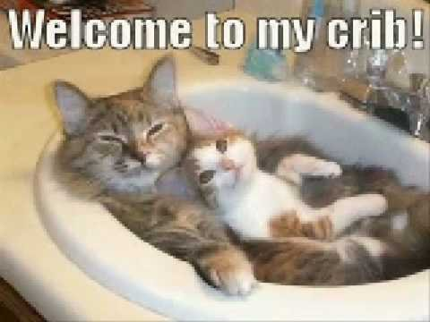 Grab the Lovely Funny Cat Pictures Youtube