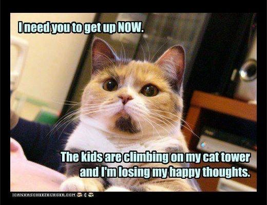 you need to up now Funny Cats Cute Funny Animals Funny Animal