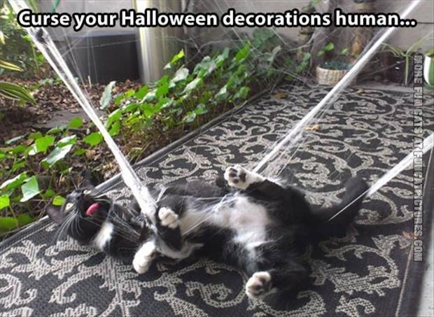 funny cat pics curse your halloween decorations