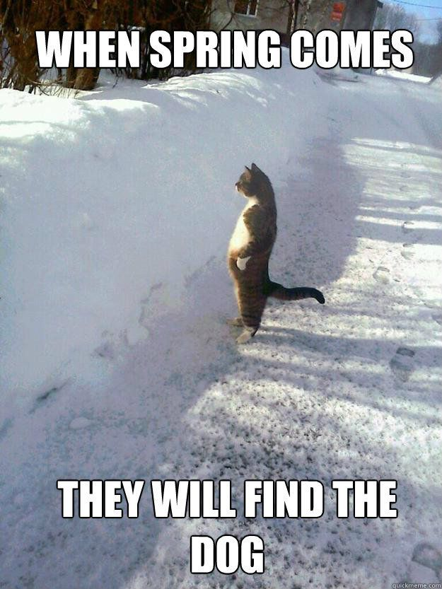 cat spring find dog 56f154ab3df78ce5f83be20d