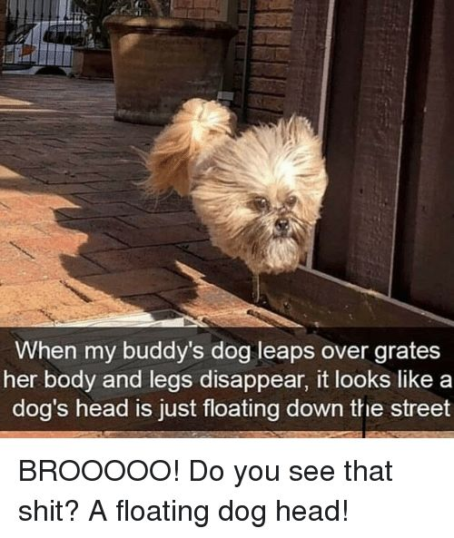 Dogs Funny and Head When my buddy s dog leaps over grates her body