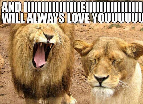 I Will Always Love You by Whitney Houston Not the most traditional way to represent the song but s funny