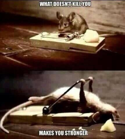 What doesn t kill you makes you stronger Funny Animal Quotes Funny