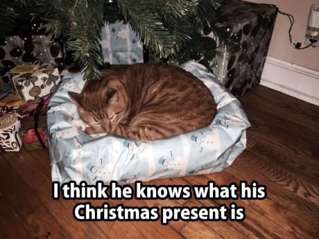 cat christmas present bed