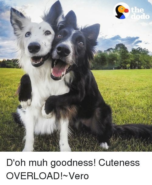 Cute Good and Girl Memes e ず O D oh muh goodness