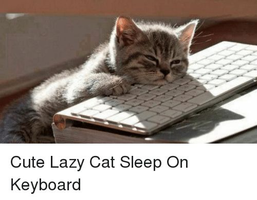 Cats Cute and Funny Cute Lazy Cat Sleep Keyboard