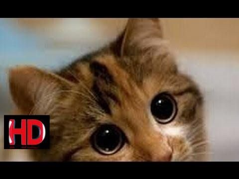 Cats and dogs with big cute eyes Funny and cute animal pilation