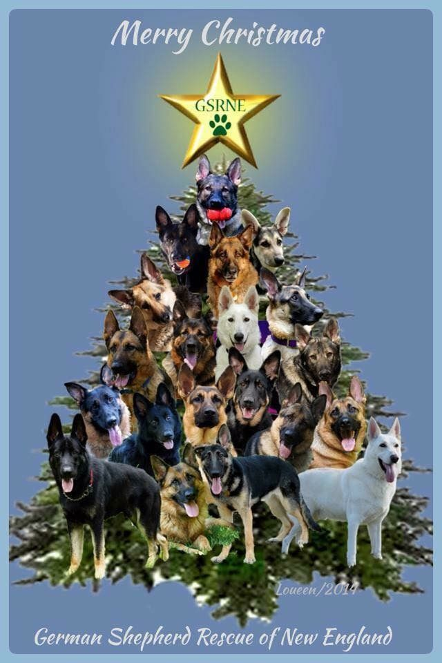 The German Shepherd Christmas