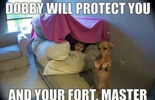Explore Pillow Forts Dog Stuff and more Funny