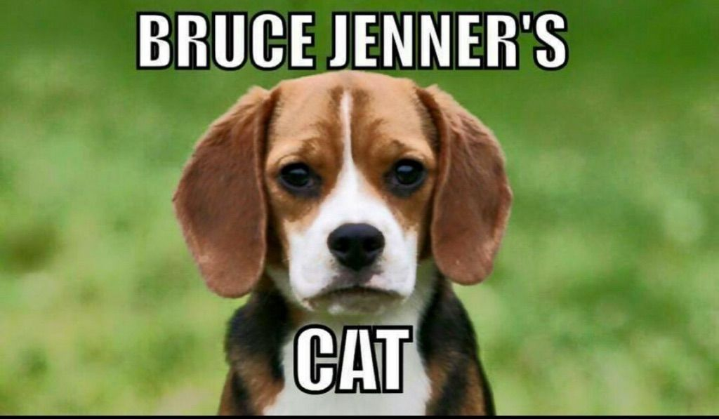 Bruce Jenner needs help naming his Pussy cat