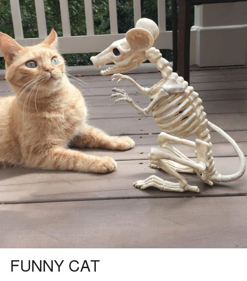 Funny Cat and Funny Cat FUNNY CAT