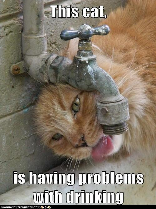 Grab the New Funny Cat Drinking Memes