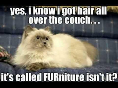 funny cat news funny cat memes clean
