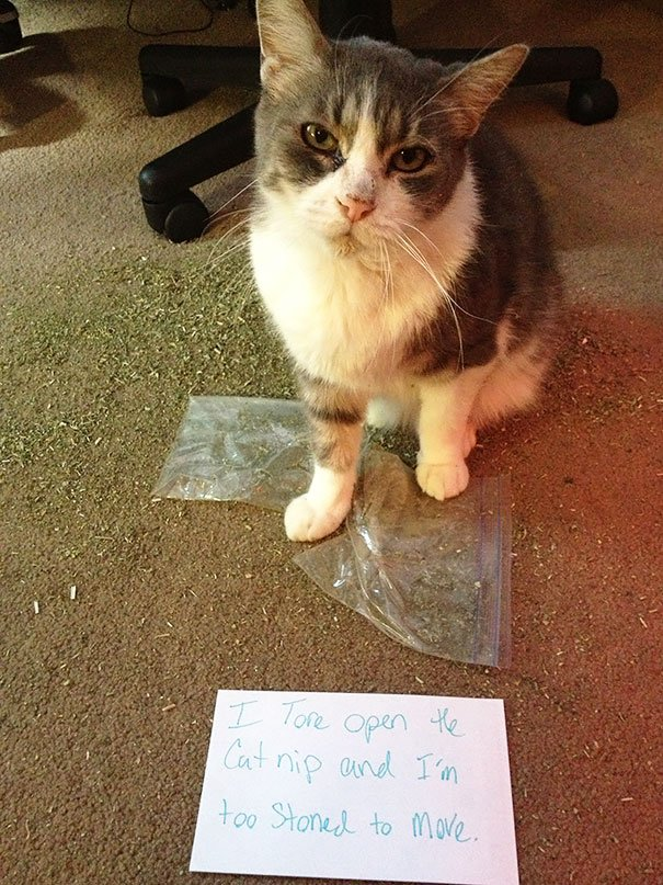 30 Cats Being Publicly Shamed For Being A holes