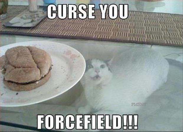 funny cat wanting food