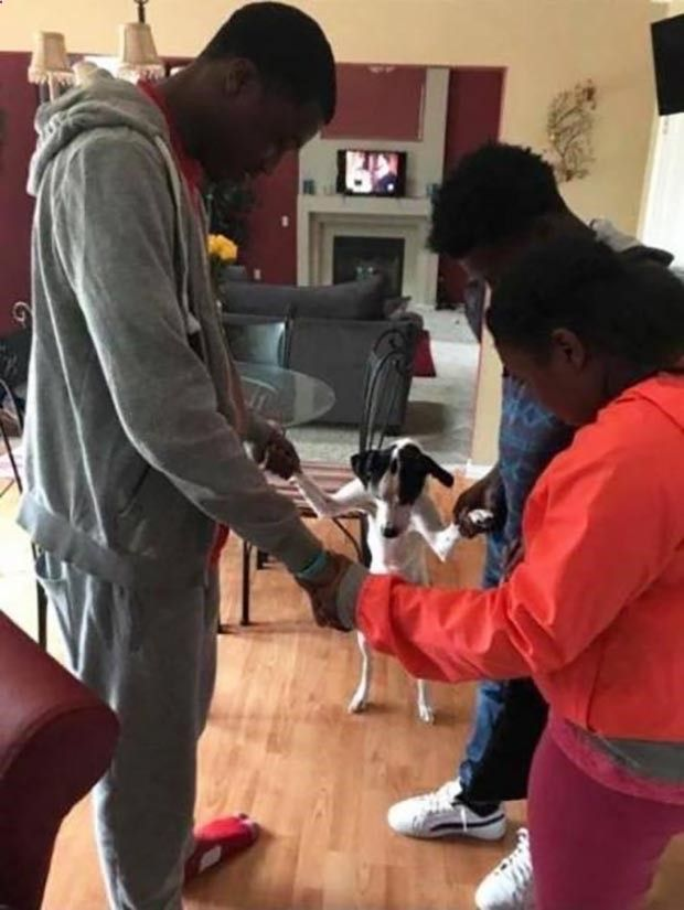 Family dog prayer circle Funny Pics Memes