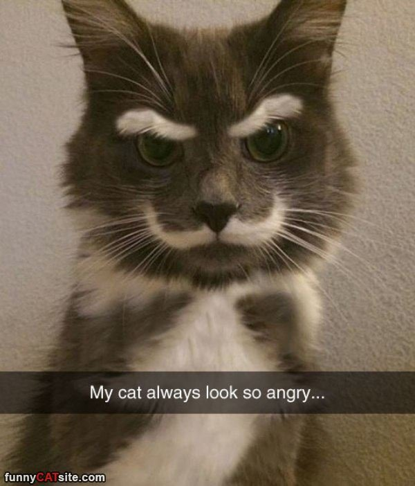 Grab the Prodigious Funny Angry Cat Pictures