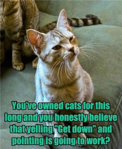 "Cat Humor You ve owned cats for this long and you honestly believe that yelling ""Get down"" and pointing is going to work I never learn"