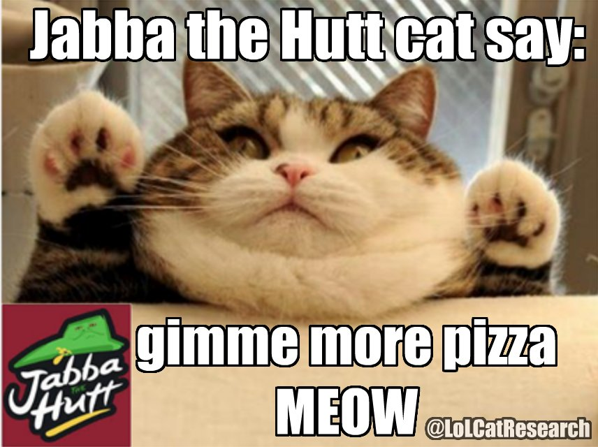 Jabba the Hutt Cat