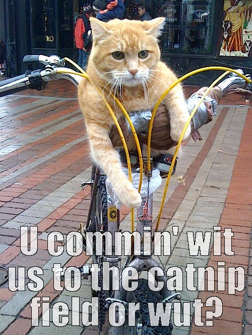 funny cats cat meme bike cat bicycle cat cat on bicycle
