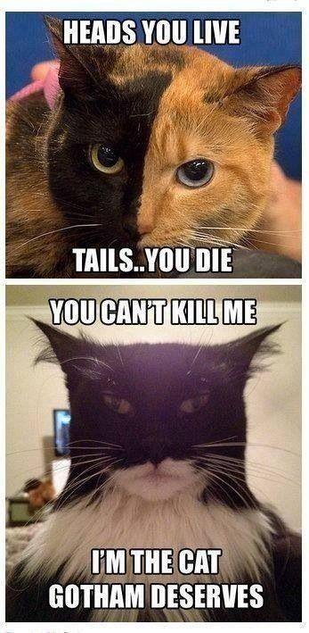 Batman cat cat memes