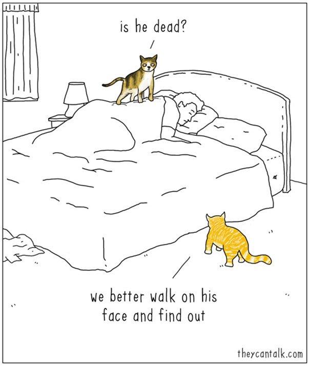 Funny Animal ics