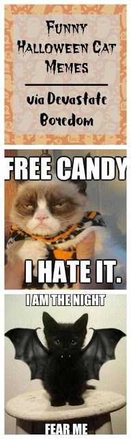 Grab the Prodigious Happy Halloween Pictures Funny Cat