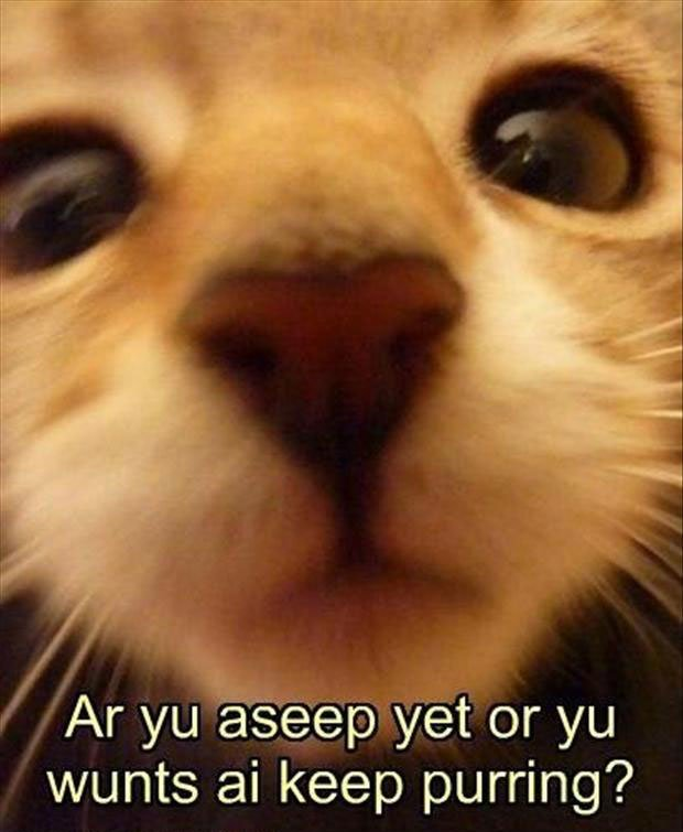 Funny Cat with Captions 35