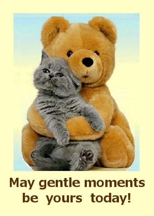 Birthday Cards for Friends Funny Lovely 88 Best Cat Birthday Cards Pinterest