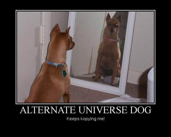 019 demotivational dog