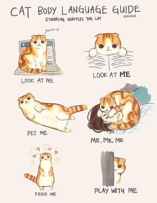 Cat Body Language Guide…