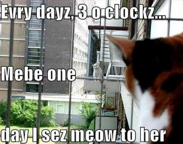 "55 Funny Cat Memes ""Evry dayz 3 o clockz Mebe """