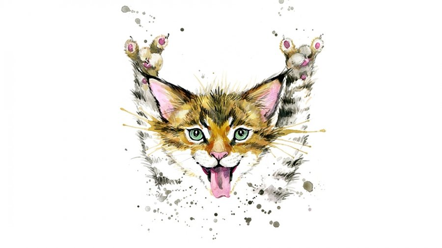 A guide to cat idioms and expressions and how to use them Young Post