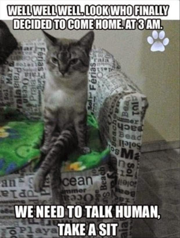 30 Funny animal captions part 22 30 pics animal meme funny